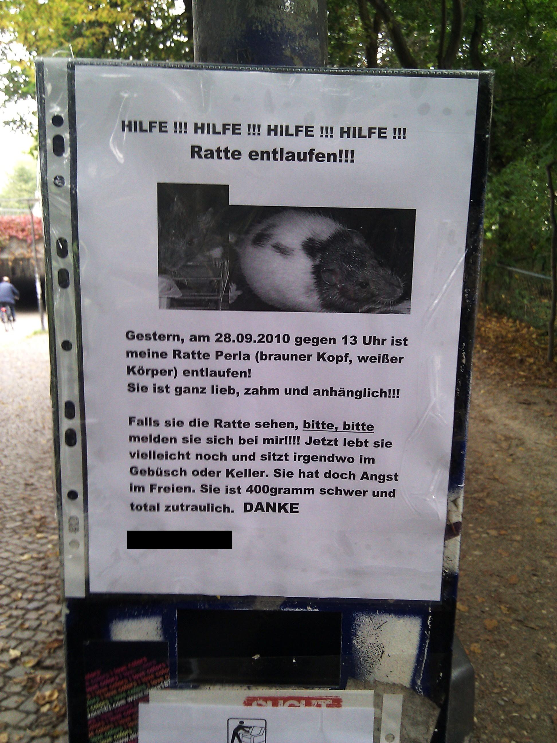 HILFE !!! HILFE !!! HILFE !!! HILFE !!! Ratte entlaufen!!! Gestern, am 28.09.2010 gegen 13 Uhr ist meine Ratte Perla (brauner Kopf, weißer Körper) entlaufen! Sie ist ganz lieb, zahm und anhänglich!!! Falls sie die Ratte sehen, bitte, bitte, melden sie sich bei mir!!!! Jetzt lebt sie vielleicht noch und sitzt irgendwo im Gebüsch oder Keller. Sie hat doch Angst im Freien. Sie ist 400gramm schwer und total zutraulich. *DANKE* [0163 / XXXXXXX]
