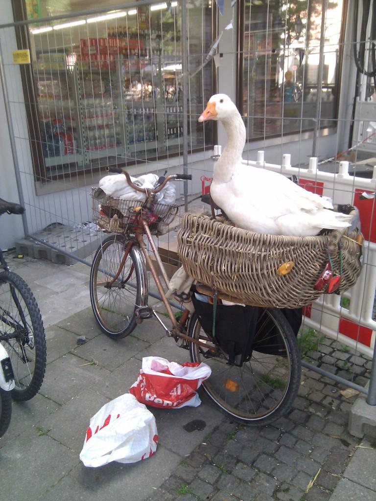Eine lebende Gans im Gepäckkorb eines abgestellten Fahrrads, vor einem Supermarkt, mitten in der Stadt